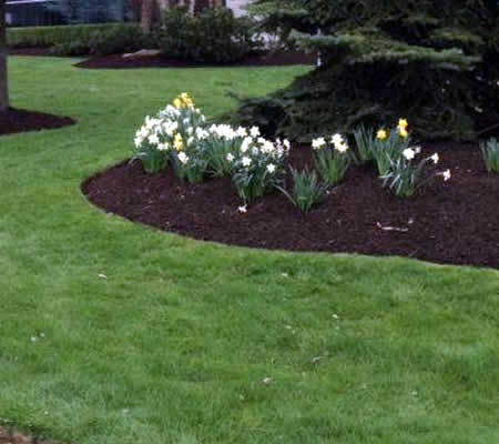 Chester Springs Landscaping Maintenance near me